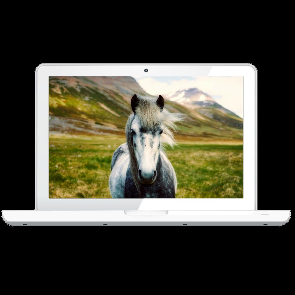 Equine-Virtual-Assistant-Services